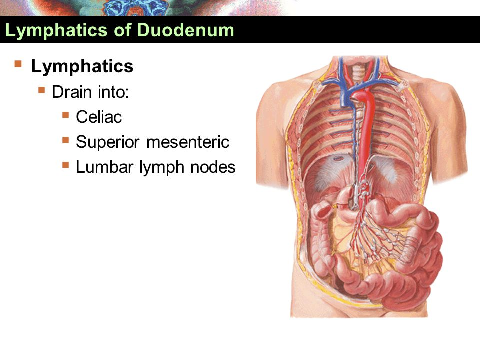 Lymphatics of Duodenum