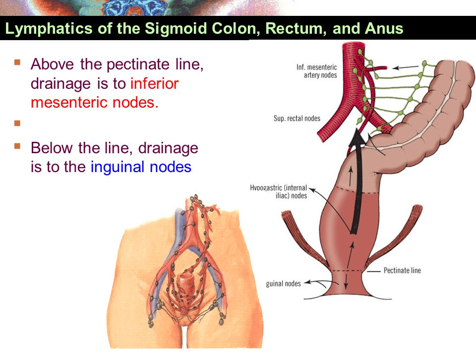 Lymphatics of the Sigmoid Colon, Rectum, and Anus