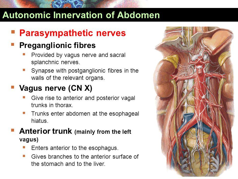 Primitive gut cloacal membrane carlson fig ppt download autonomic innervation of abdomen ccuart Images