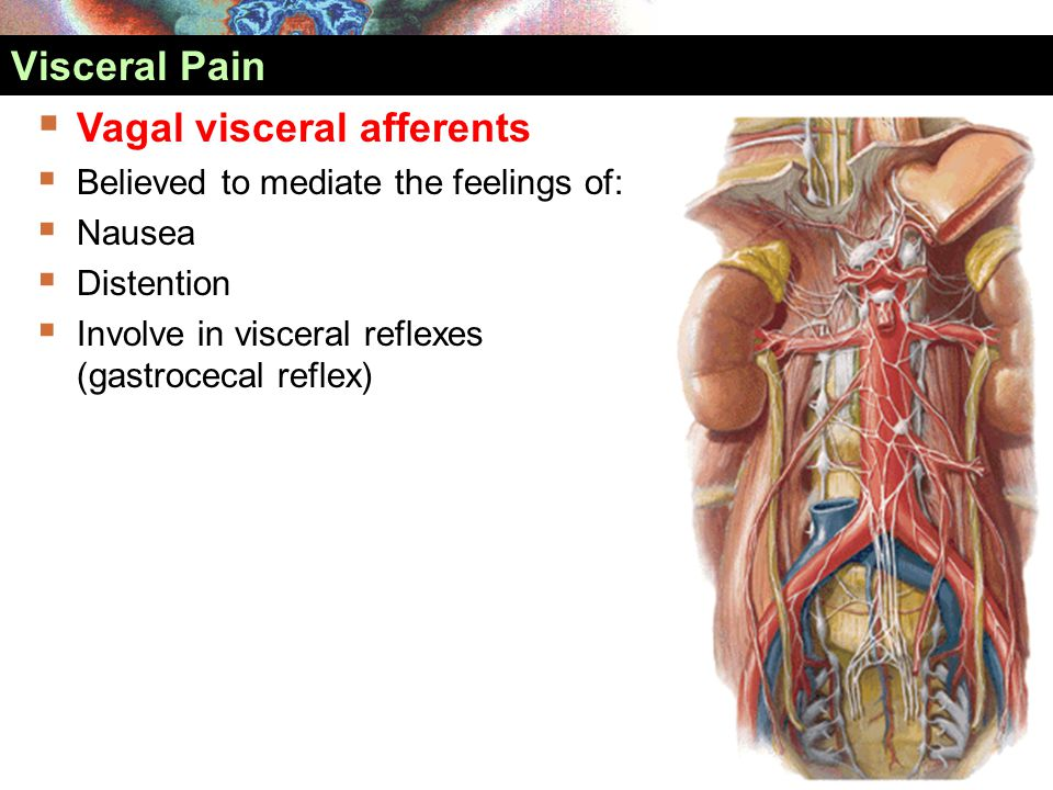 Vagal visceral afferents