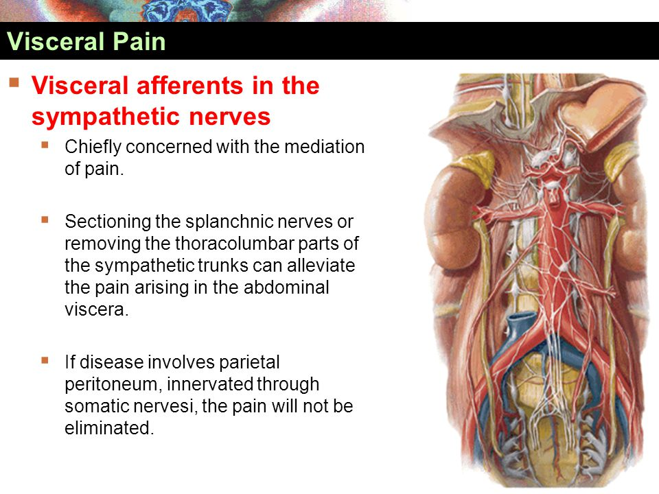 Visceral afferents in the sympathetic nerves