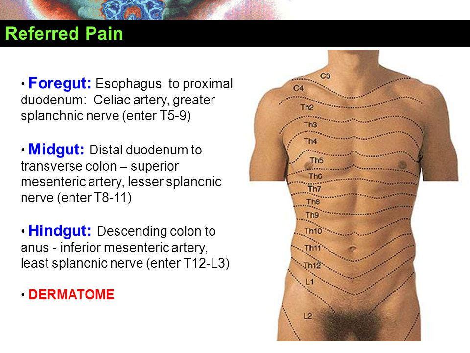 Referred Pain Foregut: Esophagus to proximal duodenum: Celiac artery, greater splanchnic nerve (enter T5-9)