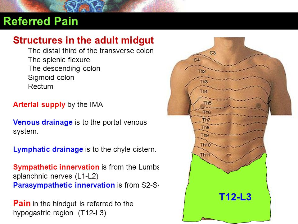 Referred Pain Structures in the adult midgut T12-L3