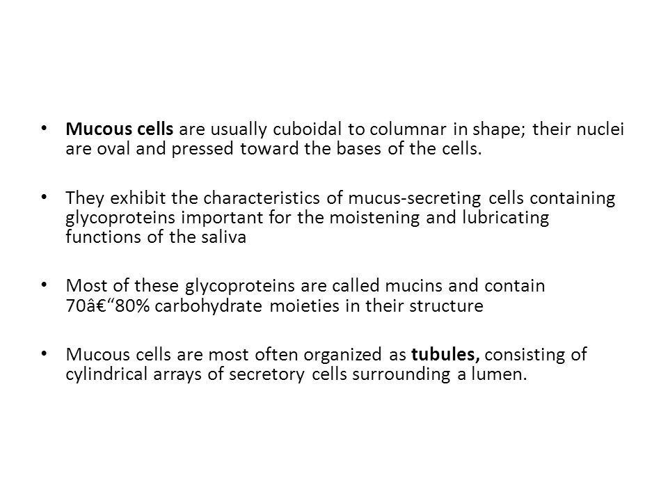 Mucous cells are usually cuboidal to columnar in shape; their nuclei are oval and pressed toward the bases of the cells.