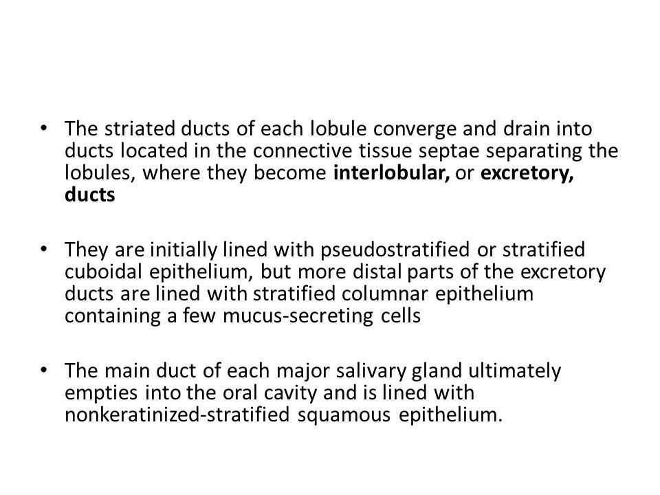 The striated ducts of each lobule converge and drain into ducts located in the connective tissue septae separating the lobules, where they become interlobular, or excretory, ducts