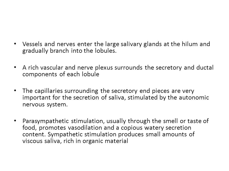 Vessels and nerves enter the large salivary glands at the hilum and gradually branch into the lobules.