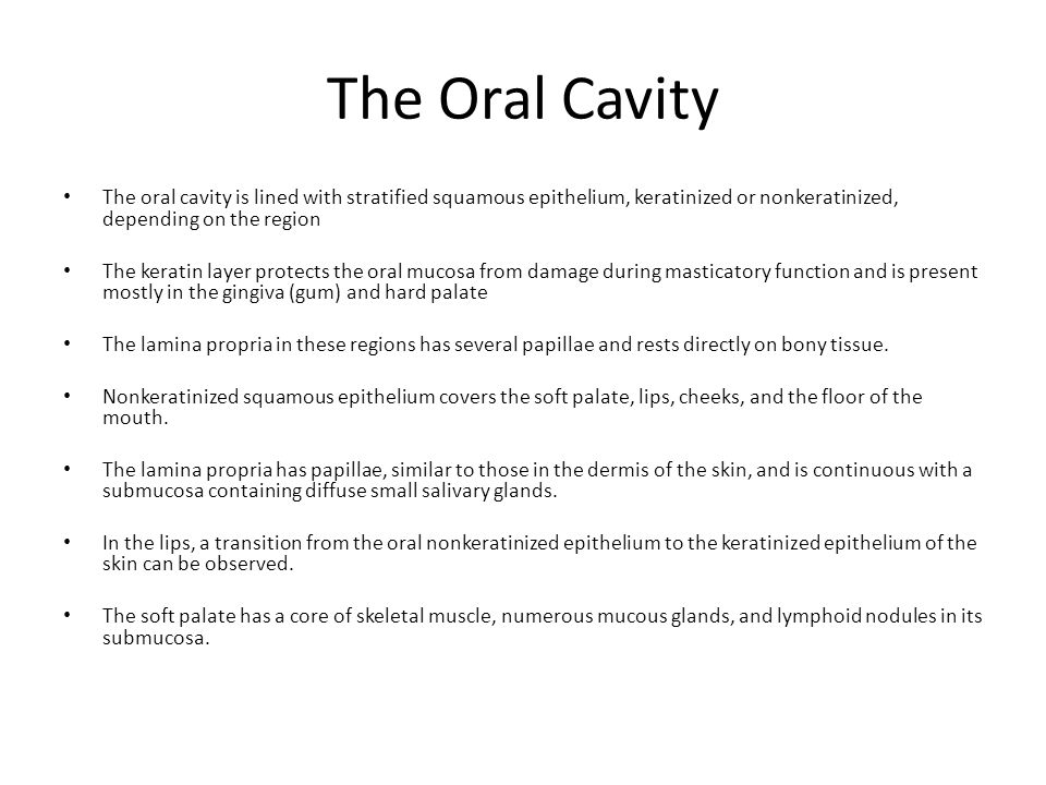 The Oral Cavity The oral cavity is lined with stratified squamous epithelium, keratinized or nonkeratinized, depending on the region.