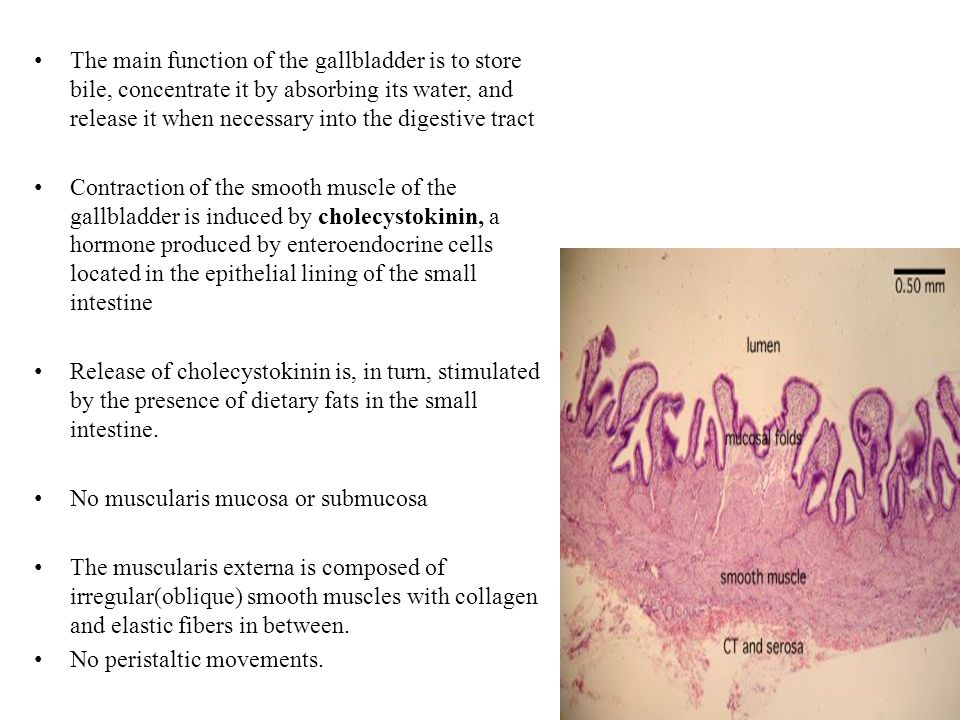 gi histology ppt download, Cephalic Vein