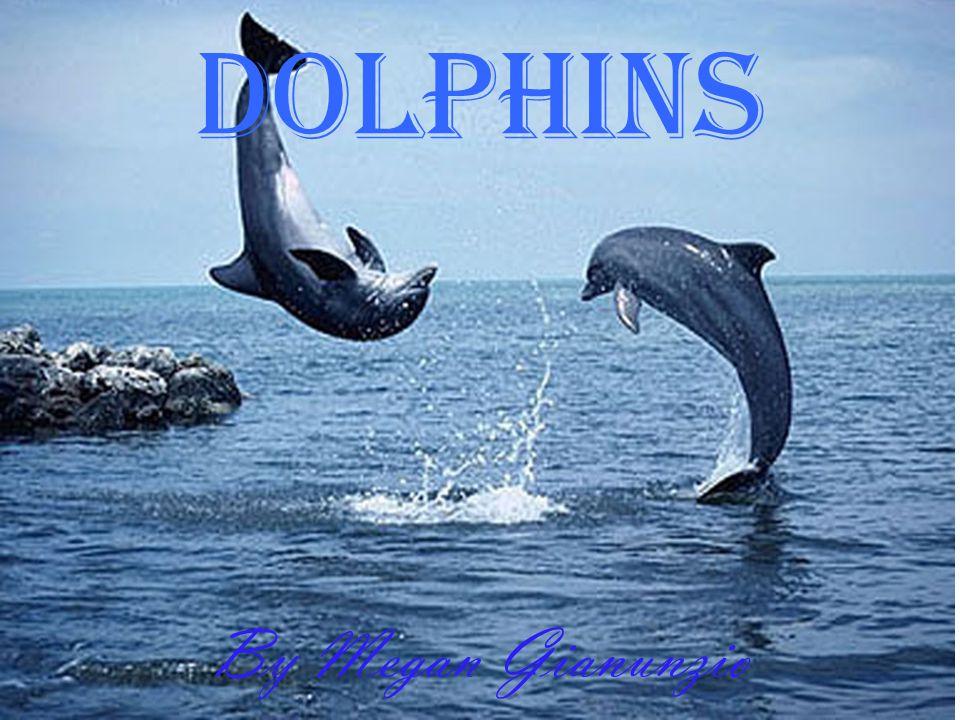 Dolphins By Megan Gianunzio