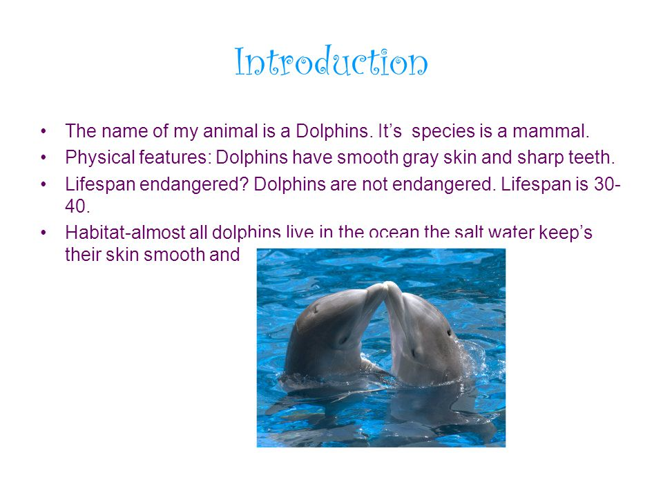 Introduction The name of my animal is a Dolphins. It's species is a mammal. Physical features: Dolphins have smooth gray skin and sharp teeth.