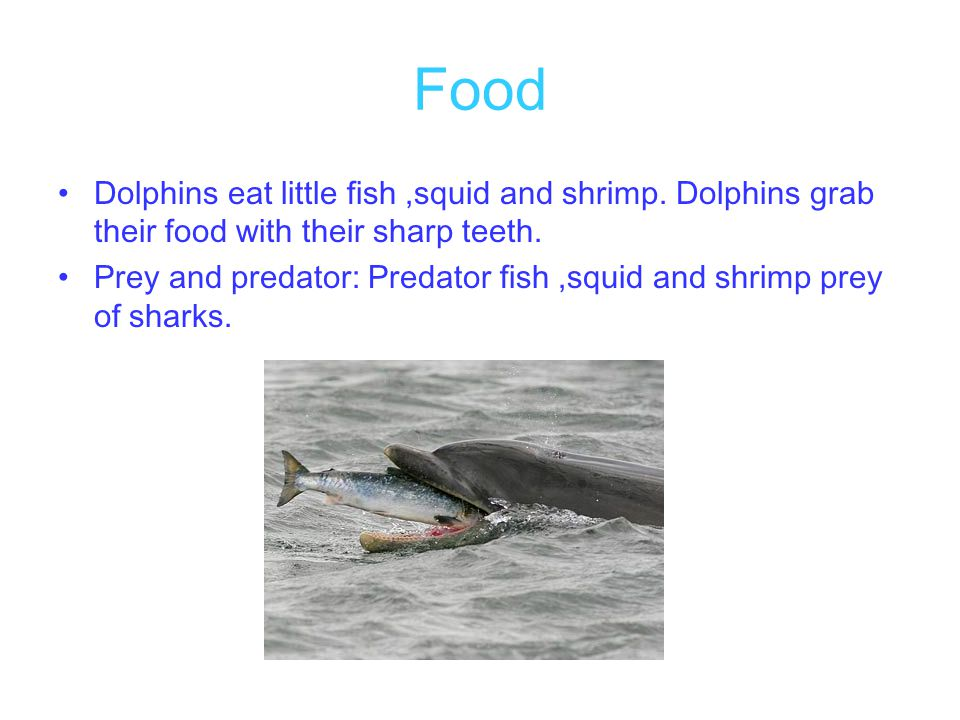 Food Dolphins eat little fish ,squid and shrimp. Dolphins grab their food with their sharp teeth.