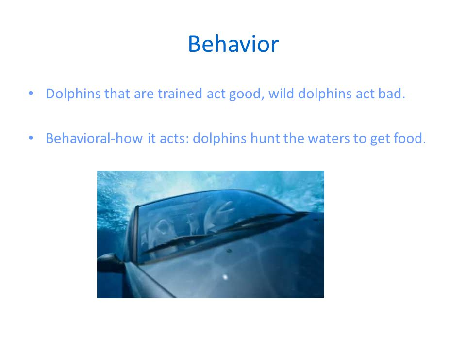 Behavior Dolphins that are trained act good, wild dolphins act bad.