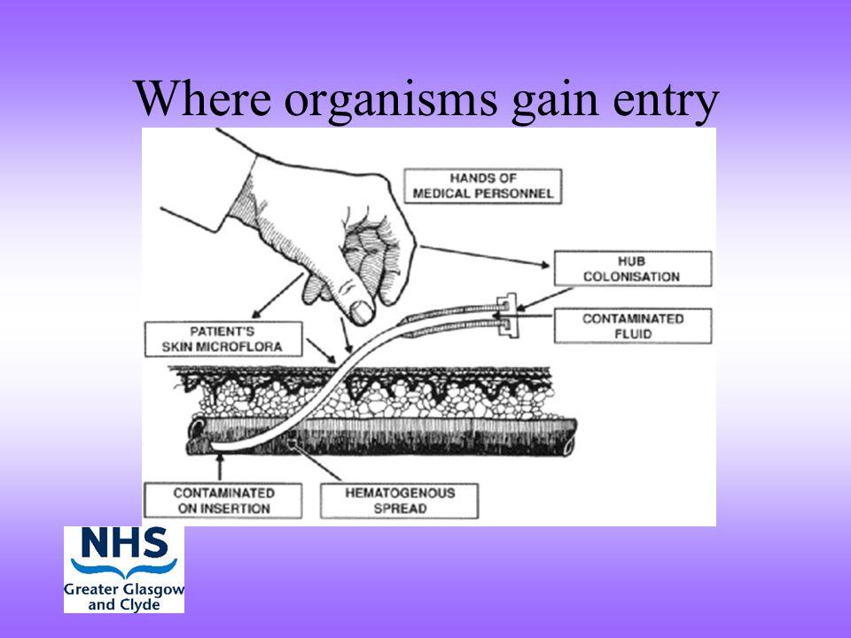 Where organisms gain entry