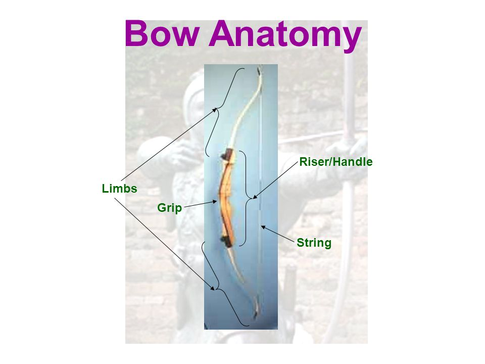 Bow Anatomy Riser/Handle Limbs Grip String