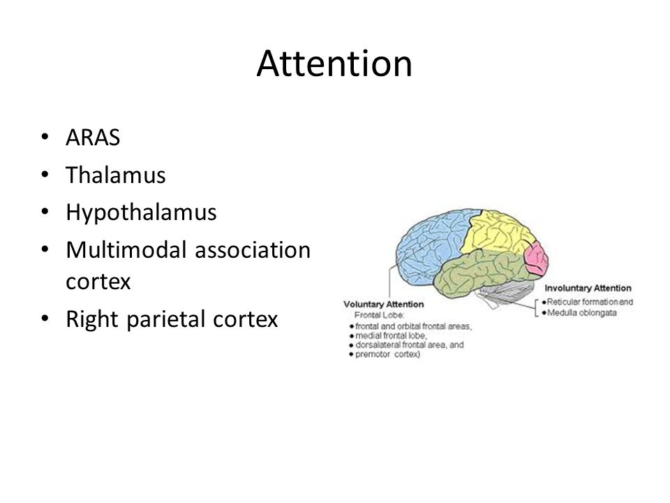 Attention ARAS Thalamus Hypothalamus Multimodal association cortex