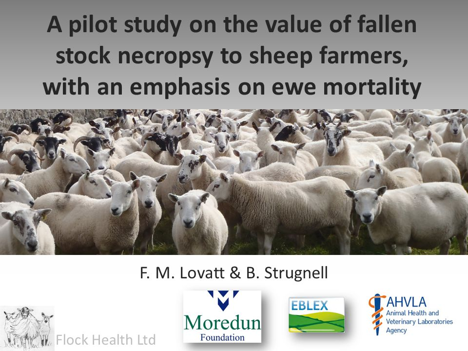 A pilot study on the value of fallen stock necropsy to sheep farmers, with an emphasis on ewe mortality