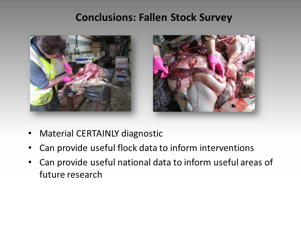 Conclusions: Fallen Stock Survey