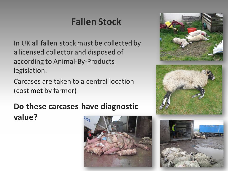 Fallen Stock Do these carcases have diagnostic value