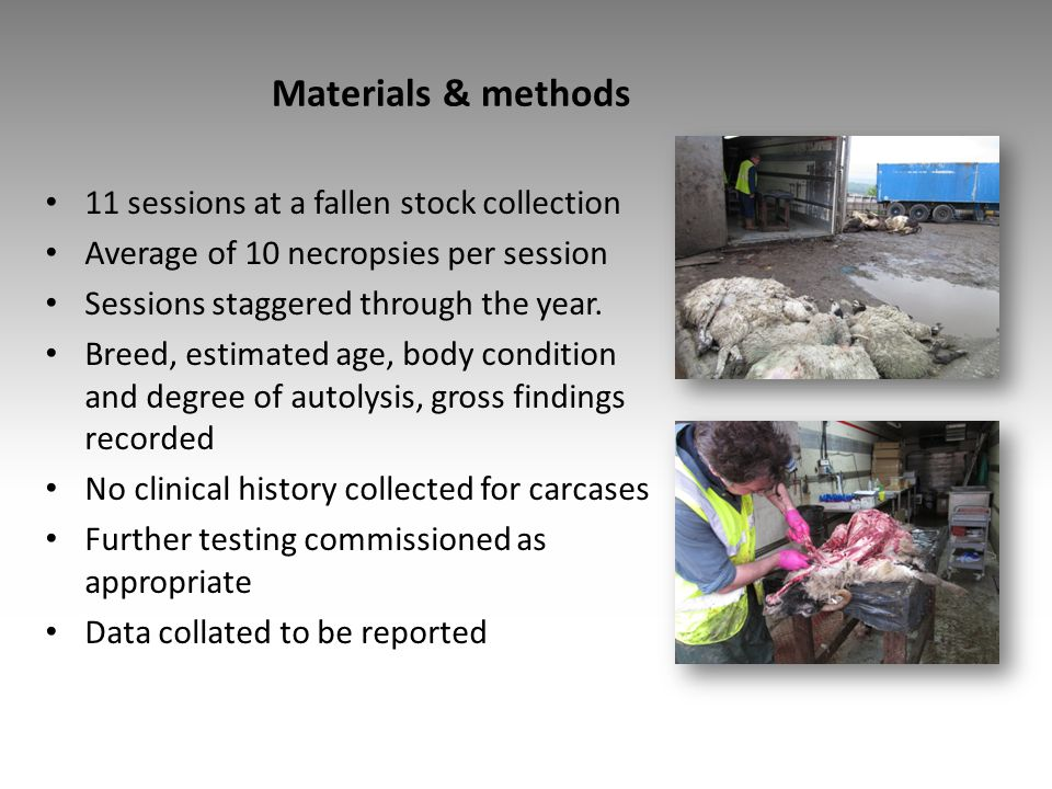 Materials & methods 11 sessions at a fallen stock collection