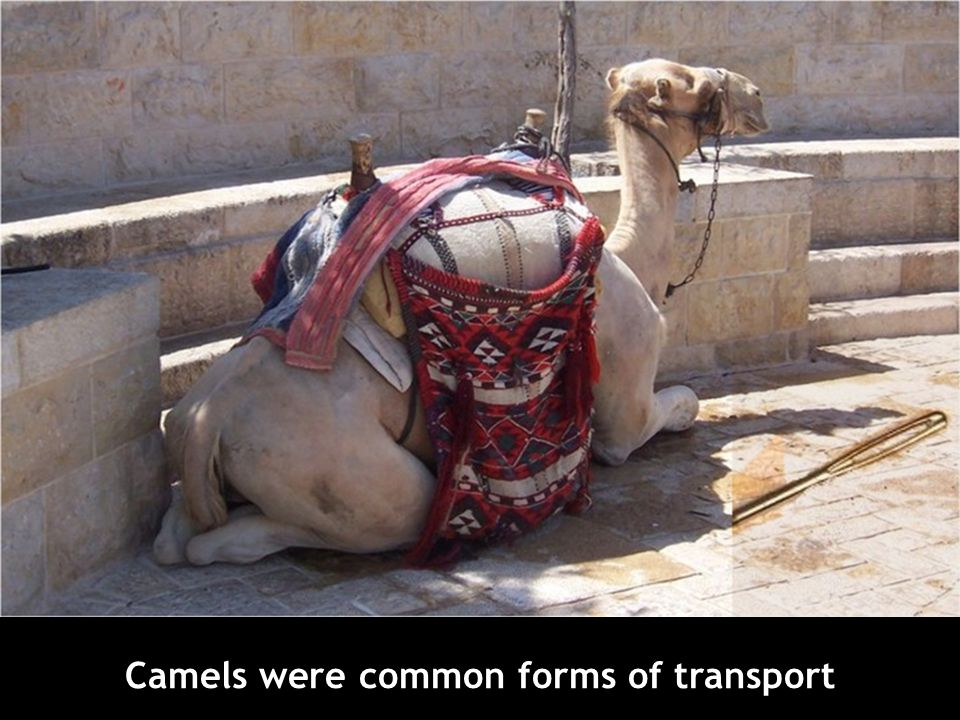 Camels were common forms of transport