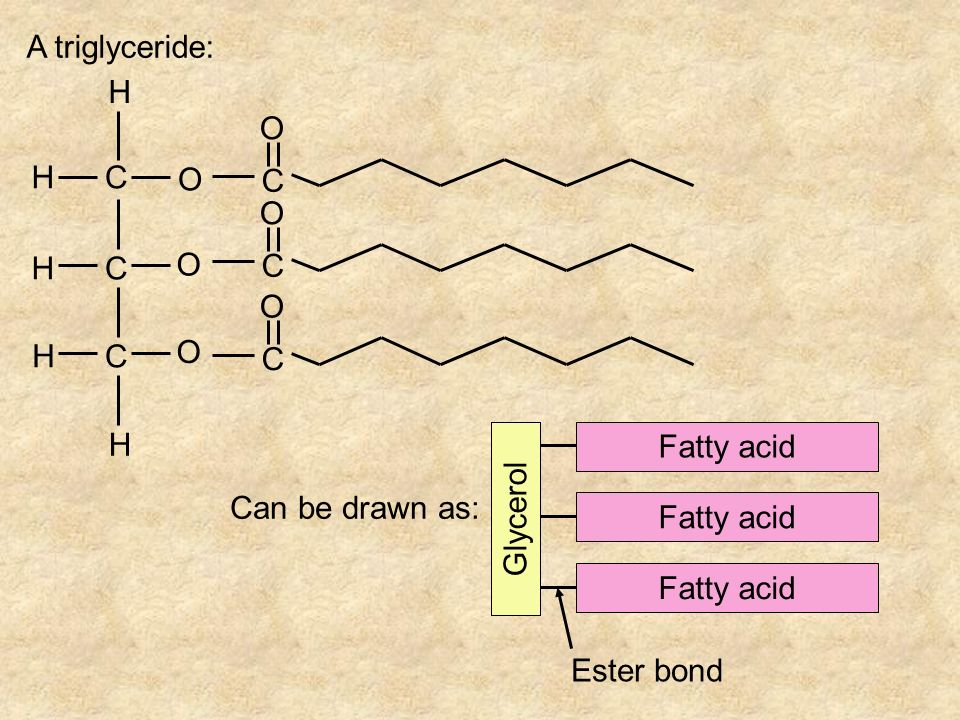 A triglyceride: C H O Glycerol Fatty acid Can be drawn as: Ester bond