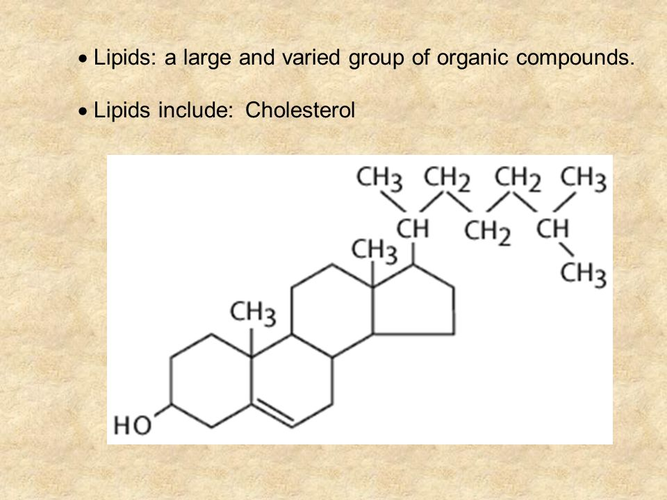  Lipids: a large and varied group of organic compounds.