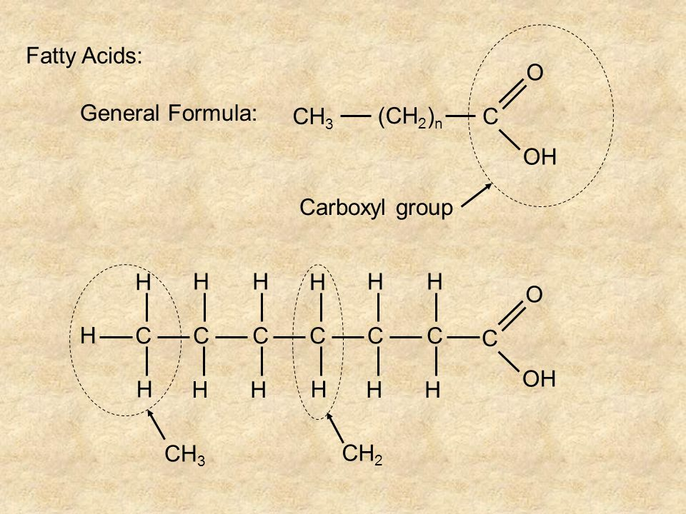 Carboxyl group Fatty Acids: General Formula: CH3 (CH2)n C O OH CH3 H C O OH CH2