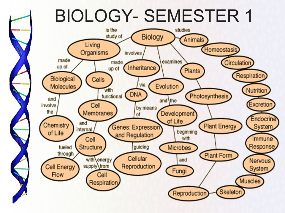 BIOLOGY- SEMESTER 1