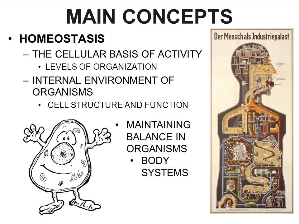 MAIN CONCEPTS HOMEOSTASIS THE CELLULAR BASIS OF ACTIVITY