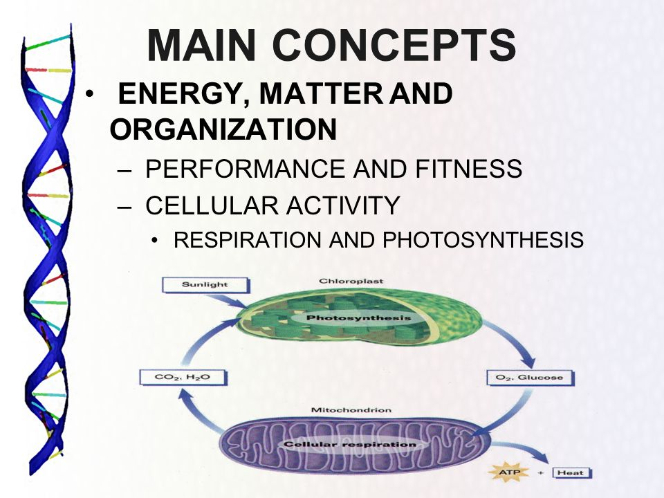 MAIN CONCEPTS ENERGY, MATTER AND ORGANIZATION PERFORMANCE AND FITNESS