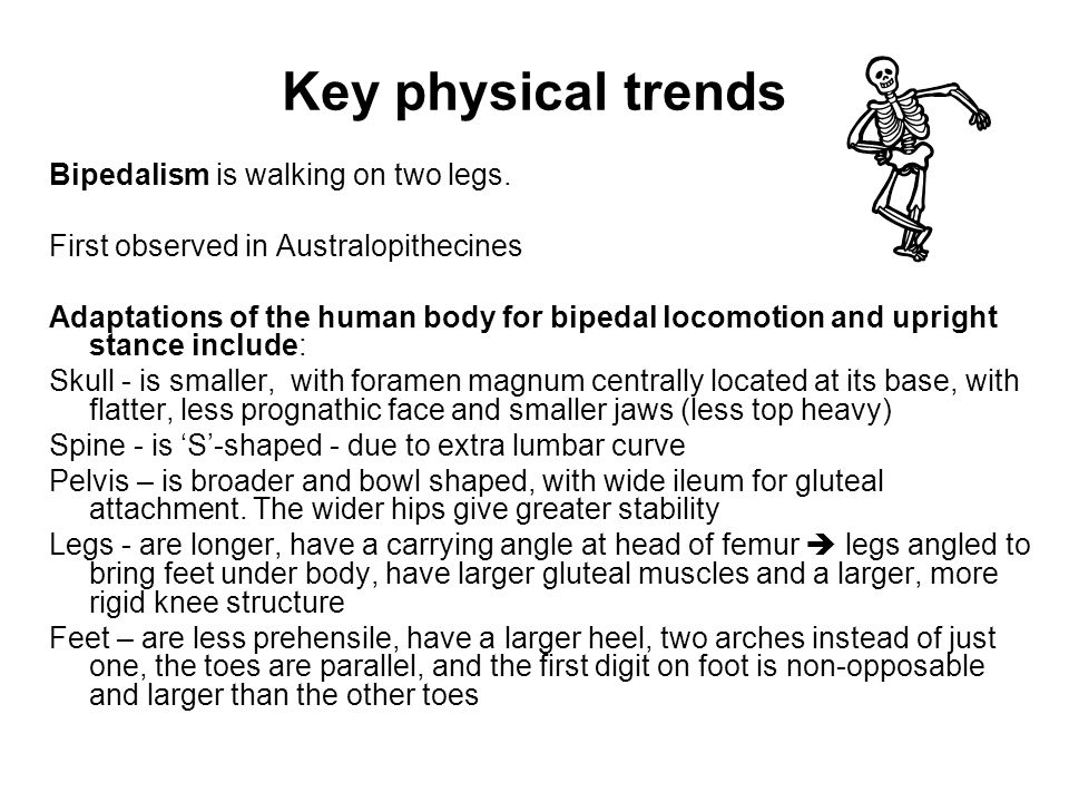 Key physical trends Bipedalism is walking on two legs.