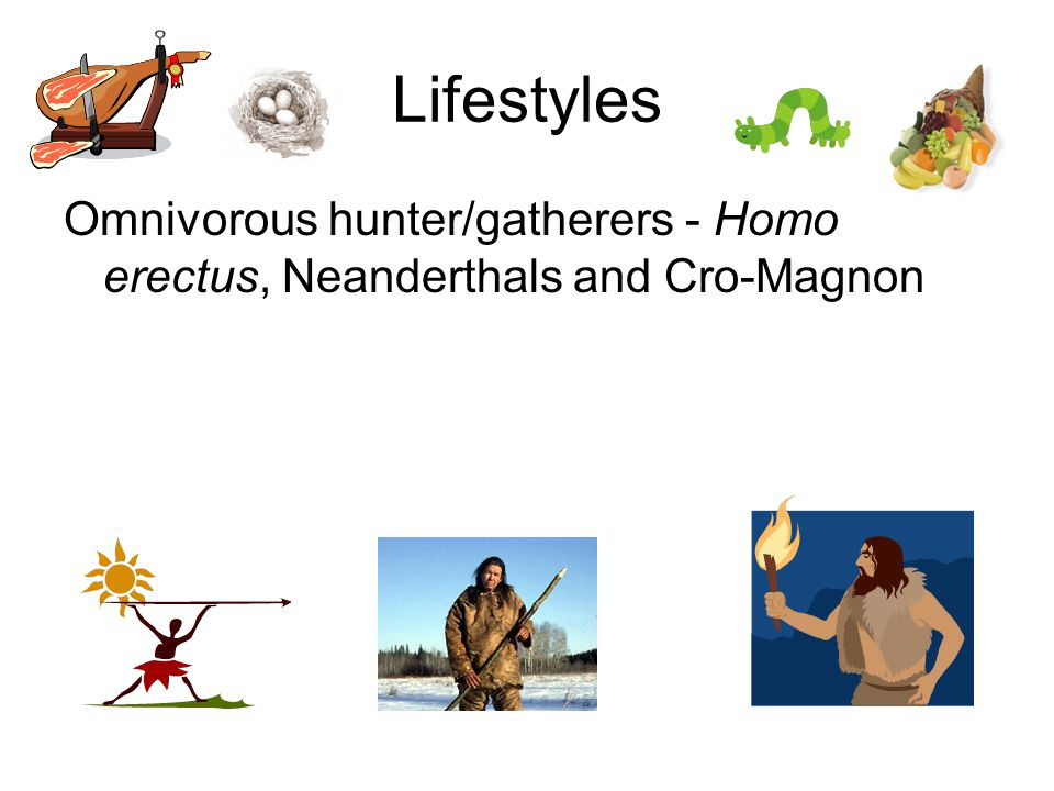 Lifestyles Omnivorous hunter/gatherers - Homo erectus, Neanderthals and Cro-Magnon