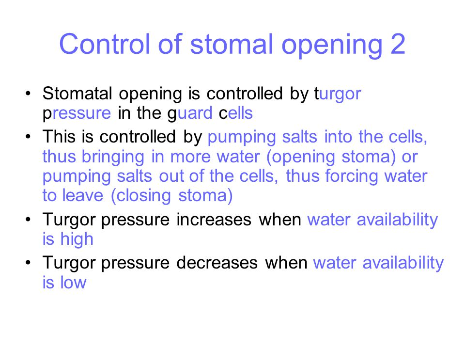 Control of stomal opening 2
