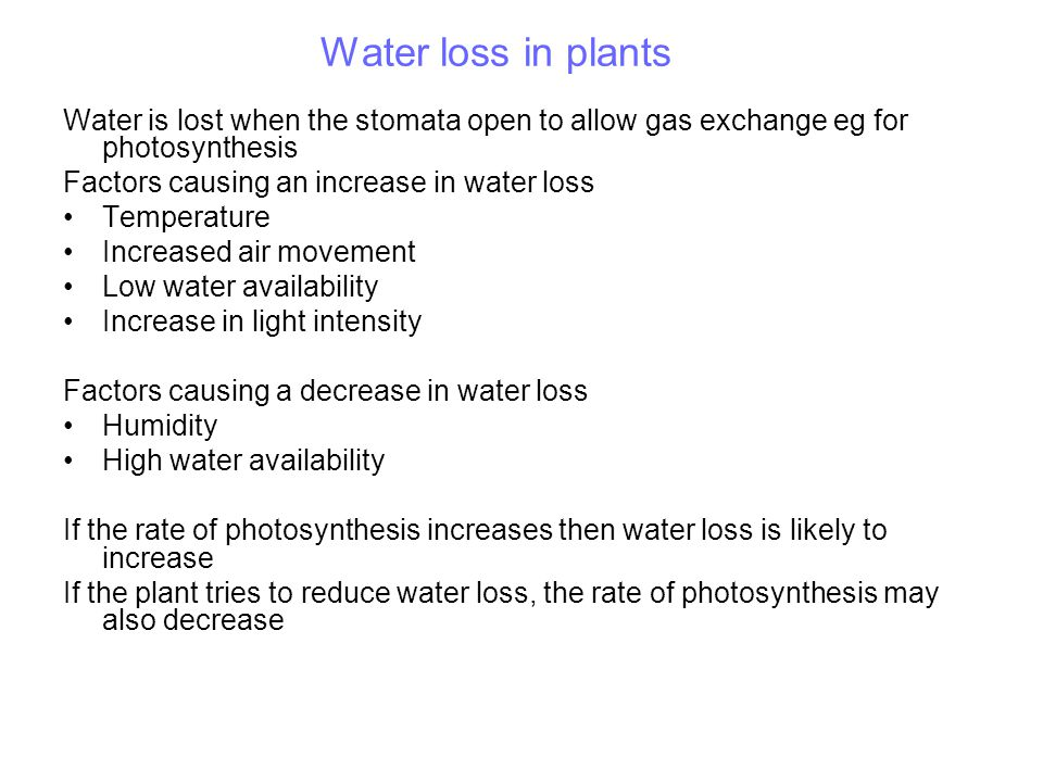 Water loss in plants Water is lost when the stomata open to allow gas exchange eg for photosynthesis.