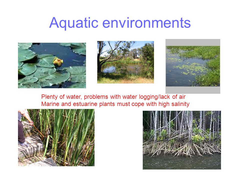 Aquatic environments Plenty of water, problems with water logging/lack of air.