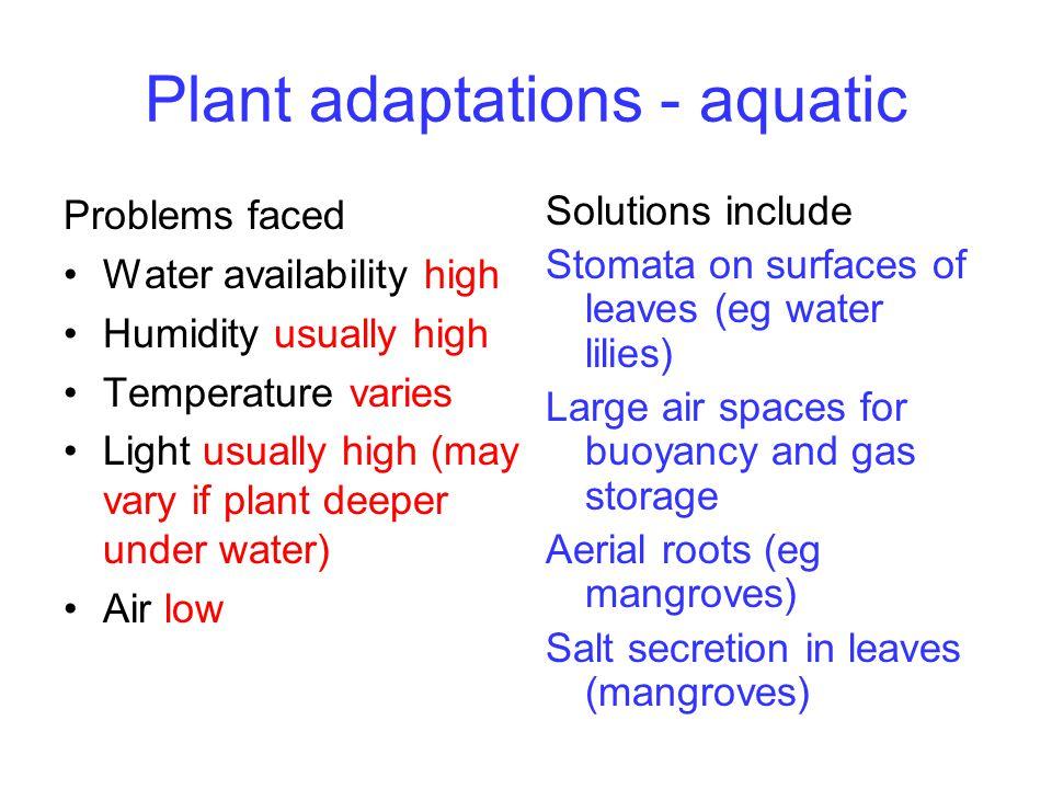 Plant adaptations - aquatic