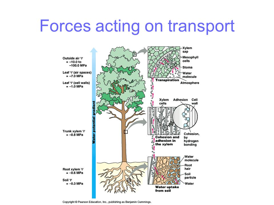 Forces acting on transport