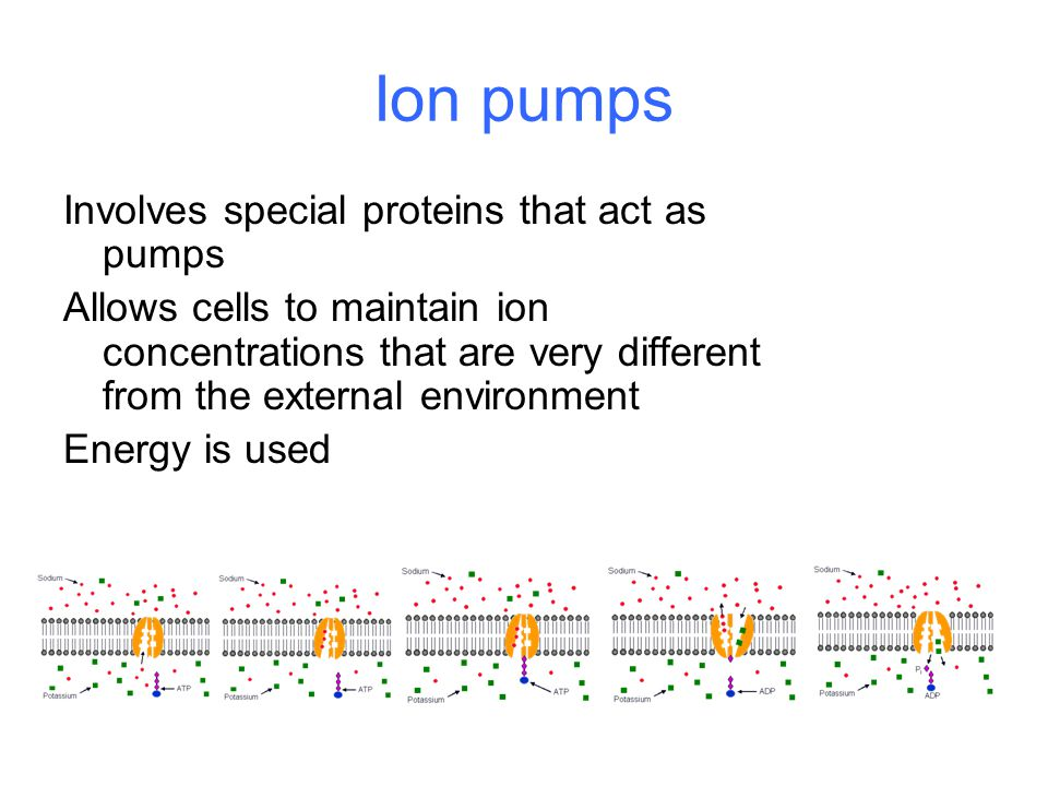 Ion pumps Involves special proteins that act as pumps