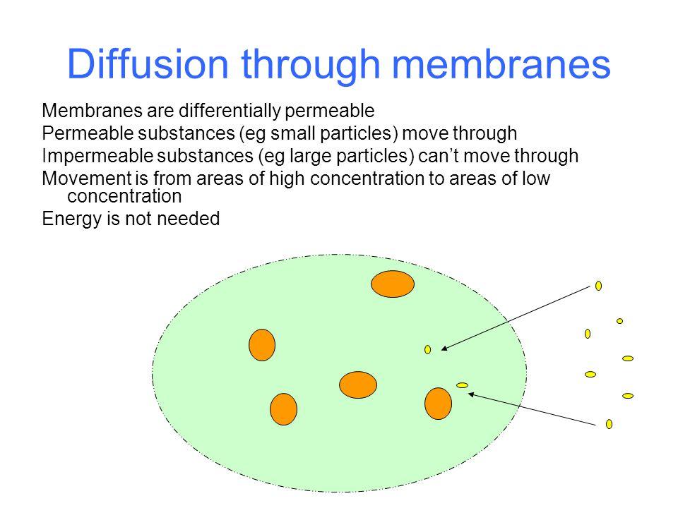 Diffusion through membranes