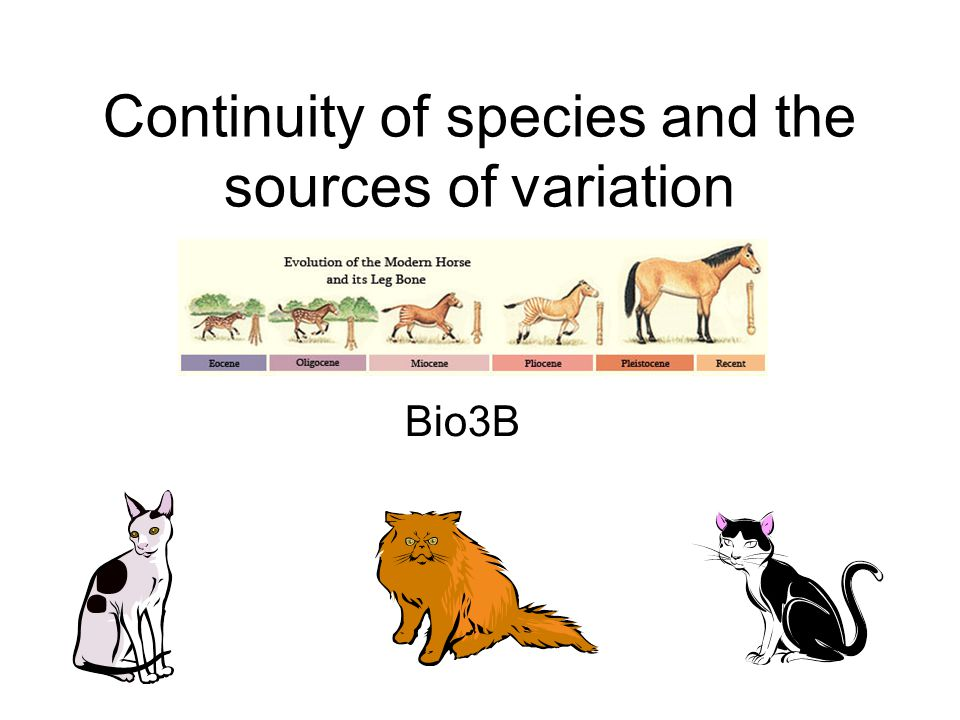 Continuity of species and the sources of variation
