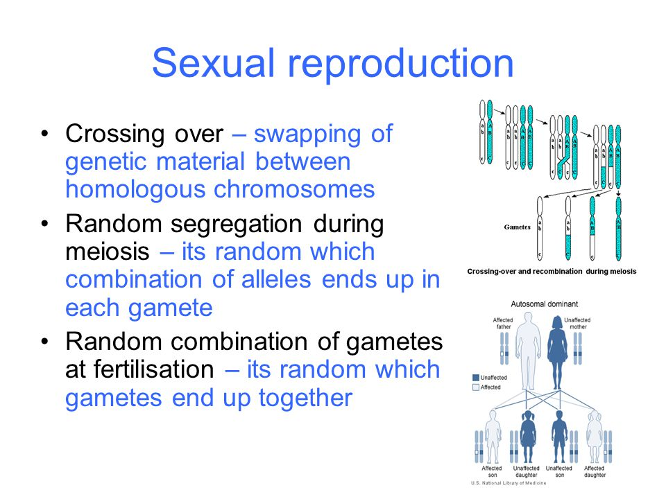 Sexual reproduction Crossing over – swapping of genetic material between homologous chromosomes.