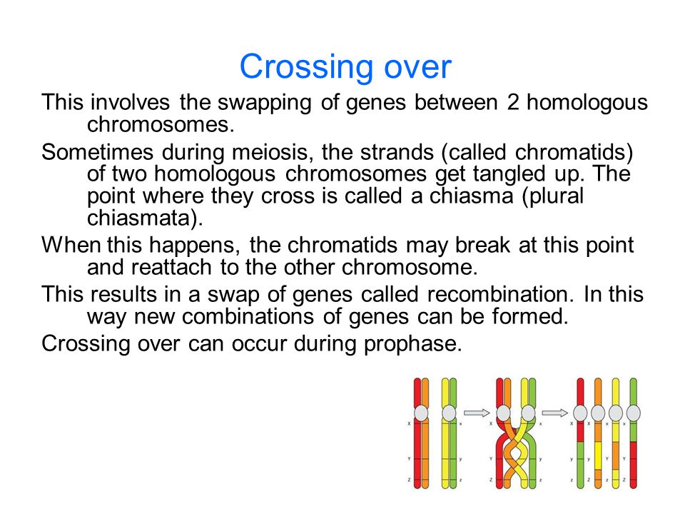 Crossing over This involves the swapping of genes between 2 homologous chromosomes.