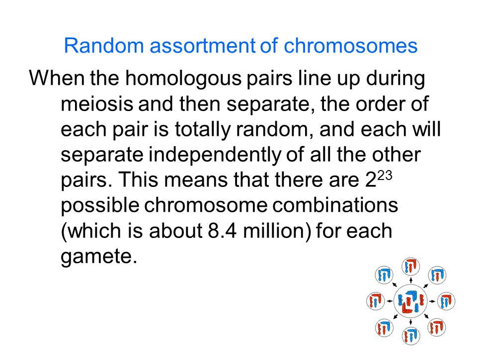 Random assortment of chromosomes