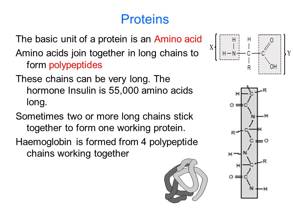 Proteins The basic unit of a protein is an Amino acid