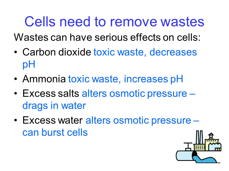 Cells need to remove wastes