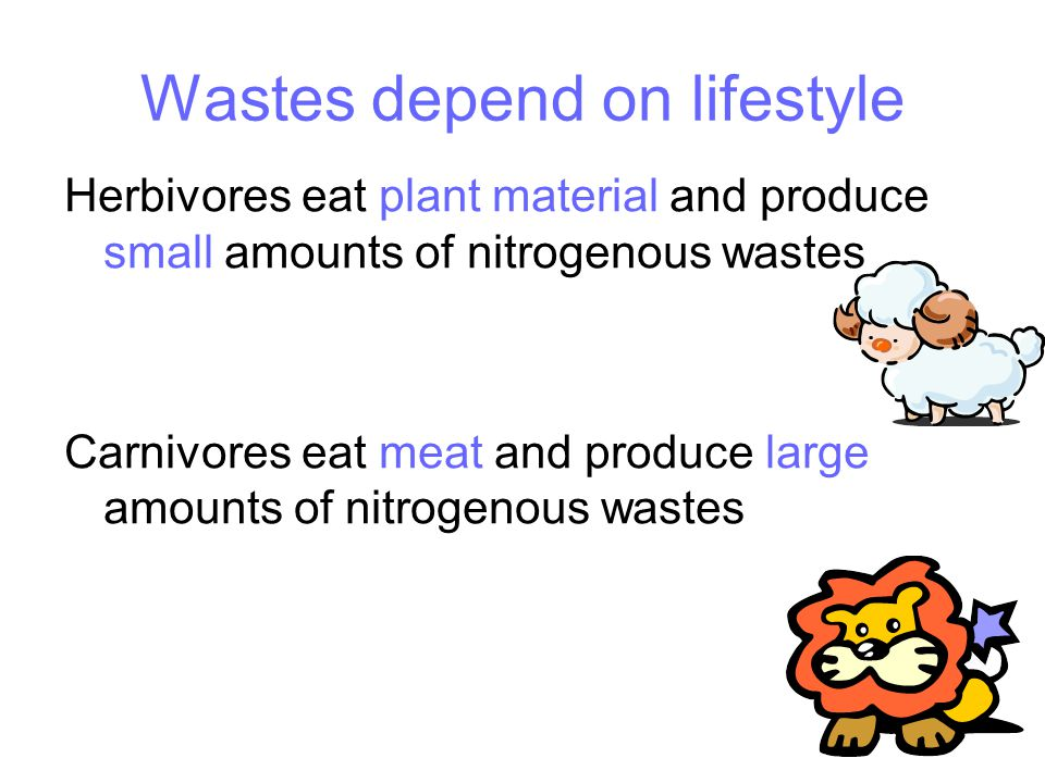 Wastes depend on lifestyle