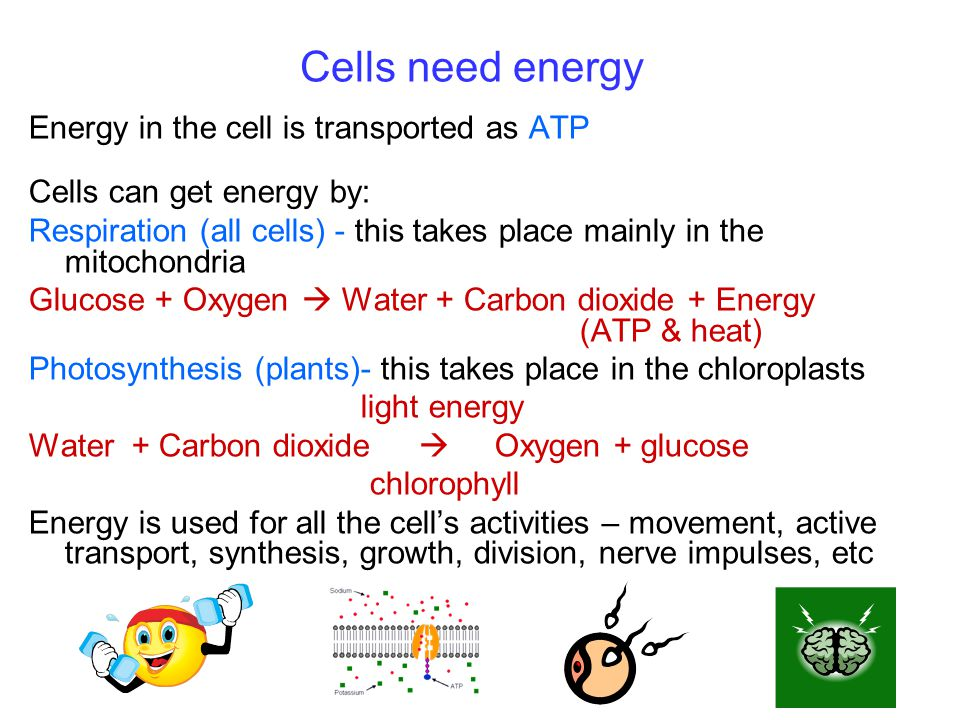 Cells need energy Energy in the cell is transported as ATP