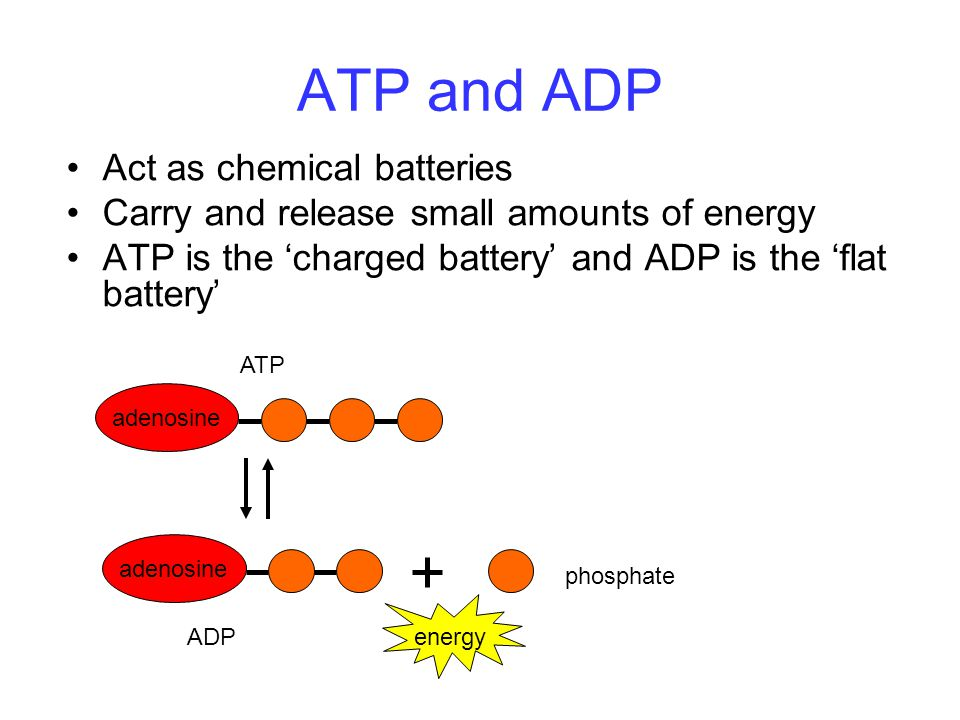 ATP and ADP Act as chemical batteries