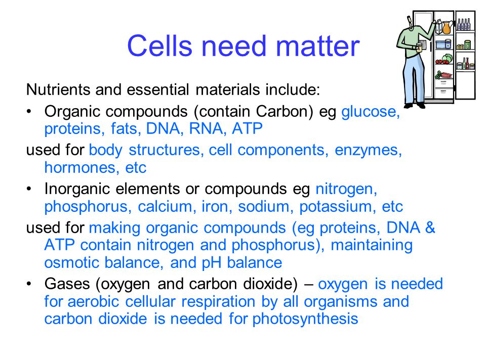 Cells need matter Nutrients and essential materials include: