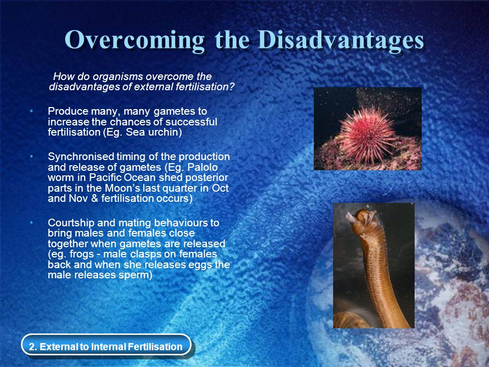 Overcoming the Disadvantages